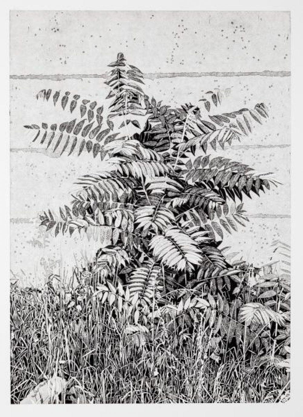 Essigbaum (2017), linocut, 55 x 39 cm (paper: 69 x 52 cm)